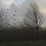 Birds in storm